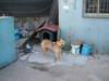 2005_0503newdeca10031