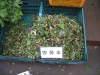 2006_0512newdica60029